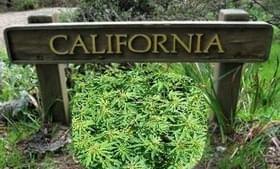 Bankrupt California city eyes marijuana for revenue