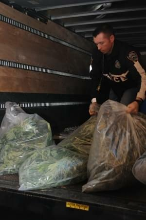 Bronx Police Make a Huge Marijuana Discovery in Apartment