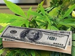 California mayor charged for accepting medical marijuana bribes