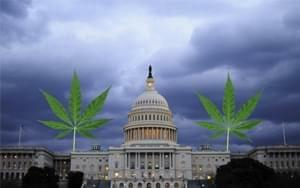 DC decriminalizes marijuana, future complications arise