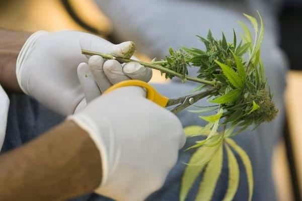 Don't Laugh: Berkeley Plans to Give Free Marijuana to the Poor