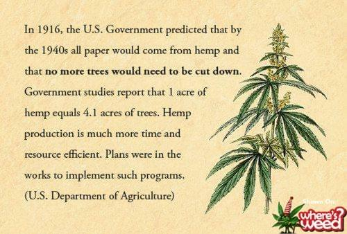 the uses of the hemp plant essay