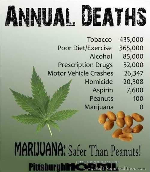 Marijuana and Children: still safer than hamburgers