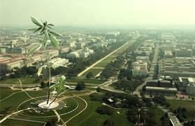 Medical Marijuana 101: Doctors, Regulators Brace For  'Big Marijuana'