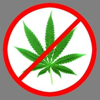 Proposed Alternatives to LA Medical Marijuana Dispensary Ban