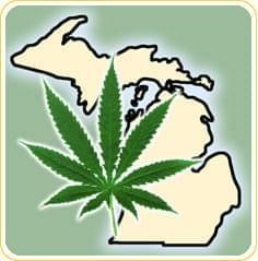 university of michigan medical marijuana study